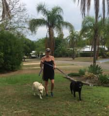 Daily walking Banks and Maggie (deaf) - Dec. 2019
