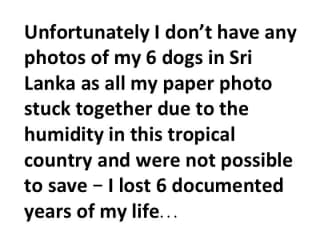Here should be some photos of my 6 dogs in Sri Lanka, but I lost all photos due to the humidity there....