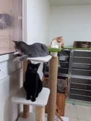 Volunteering at the cat shelter in Ruskin, FL