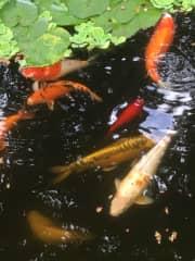 Fish-sitting!
