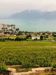 View of Vevey from the hilltops