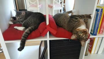 Both cats, chilling out