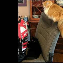 Kitties supervising their dad