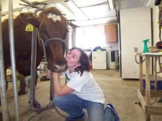 Libbi worked with many farm animals as a Vet Tech including sheep, horses and cows