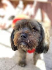 "Meet ""Tony"", my parent's dog. He is so cute!!"