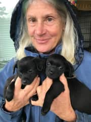 Julie with foster pups