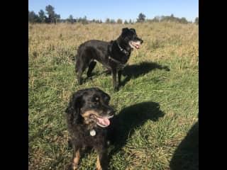 Exploring off-leash dog parks in Washington!