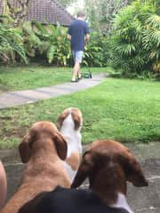 Watching Henning mowing the lawn.