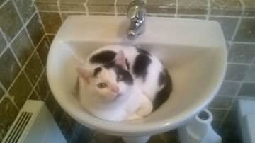 Cherry in the sink