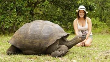 Galapagos Tortoise - I love to encounter wildlife while traveling!