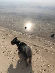 Roxy Dog (AKA Scruffer McDoodles)) at her favorite place...the beach!