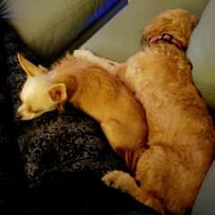 Mia, Lily and my leg!  :)