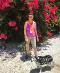 Walking Bella in Islamorada, Fl on a beautiful housesit/pet sit in the Keys