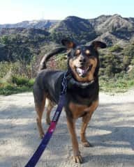 Joey on a hike with the Hollywood sign behind him