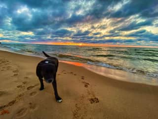 Taking Bling for a walk along the shores of Lake Michigan.