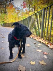 Sam enjoying a walk!