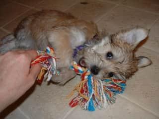 Bella was a very active puppy!