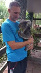 Down Under with the Koala Bears