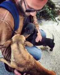 Lovely doggos at a farmstay