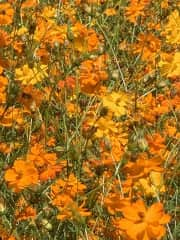 I love gardening and my NC wild flowers are my pride and joy!