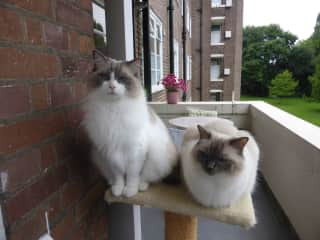 Bramble & Coco on their cat post