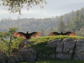 Local wildlife (turkey vultures) enjoying a sunny Spring day