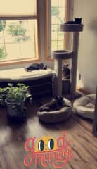 The pack's favorite room to enjoy the sun.