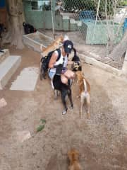 Whenever we travel we visit animal shelters & sanctuaries. This is in Thailand.