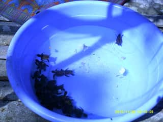 Baby turtles rescued at marine sanctuary