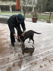 ChaChi and Mena exploring the snow with Clifford at a recent sit.