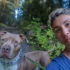 Koa, the regal Pitbull from Ashland, Oregon
