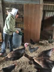Bill feeding the chickens