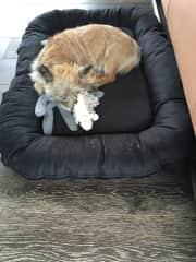 Our dog Ziggy - 14 years