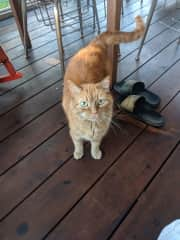 a wonderful cat we recently house sat for