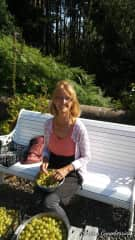 This summer sorting gooseberries in Scotland  while volunteering in the ecovillage/retreat center near Findhorn.