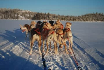 Dog sledding team Blachford Lake Lodge (Wilderness Lodge in Canada)