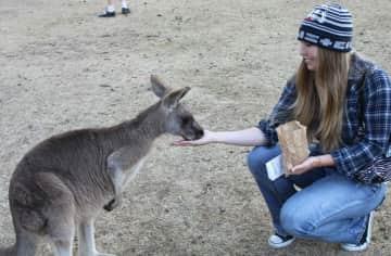 Feeding kangaroos at a sanctuary in Australia!