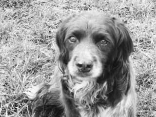 Maddie, sadly no longer with us.