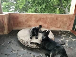 Sheba and Paco