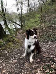 Ollie - who I walk along the river Rhone regularly