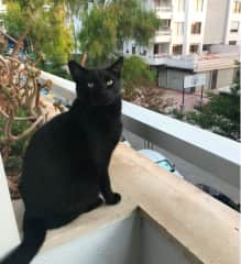 Bandit likes watching from balcony