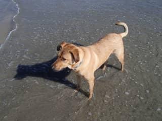 Dagan at the beach