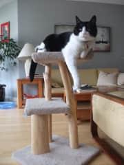 Simon - the alpha cat