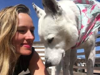 Chloe, a sweet senior dog in Sausalito