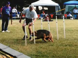Competing with our first Agility dog Chester, a Border Collie/Rottweiler cross.