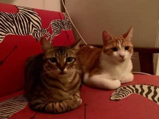 Fistuk and Yona
