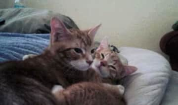 Bill and Ted :) my first #FosterFail  We lost Bill a couple years ago and we miss him everyday!