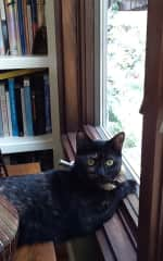 Window Watching Olive