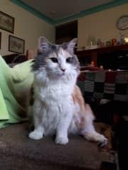 Misti - we found her dumped as a kitten
