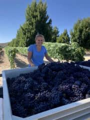 After picking grapes all morning...I do winery accounting and like to keep my hands dirty sometimes.